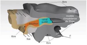 Occlusion effect FEM model